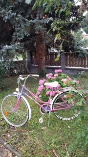 Rogova lepotica Maestral varno kolo v prometu1